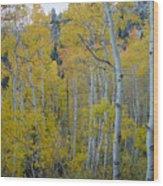 Aspen Colors Wood Print