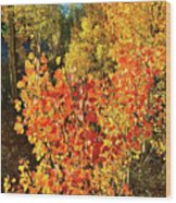 Aspen Colors In Dillon Colorado Wood Print