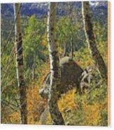 Aspen Curves Wood Print