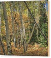 Aspen Ecosystem Wood Print