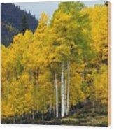 Aspen Fall 3 Wood Print