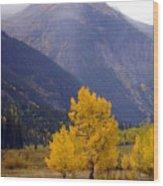 Aspen Fall 4 Wood Print