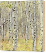 Aspen Forest 2 - Photo Painting Wood Print