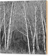 Aspen Forest Black And White Print Wood Print
