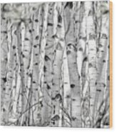 Aspen Forest Iv Wood Print