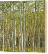 Aspen Forrest Wood Print