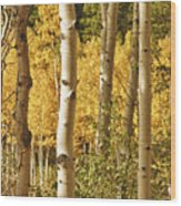 Aspen Gold Wood Print by James BO  Insogna
