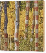 Aspen Gold Red White And Blue Wood Print