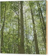 Aspen Green Wood Print by Eric Glaser