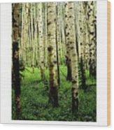 Aspen Grove Flagstaff Arizona Wood Print