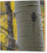 Aspen In Fall Wood Print