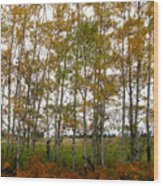 Aspen In Fall Wood Print