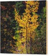 Aspen In Hope Valley Wood Print