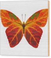 Aspen Leaf Butterfly 2 Wood Print