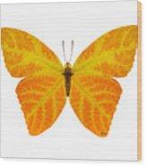 Aspen Leaf Butterfly 3 Wood Print