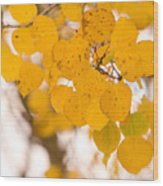 Aspen Leaves Wood Print by James BO  Insogna