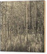 Aspen Light Wood Print