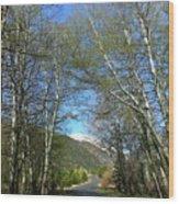 Aspen Lined Road Wood Print