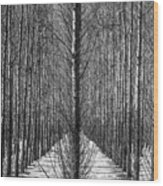 Aspen Rows Wood Print