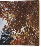 Aspen Shade Wood Print