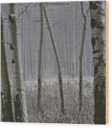 Aspen Stand In A Snowstorm Wood Print
