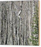 Aspen Stand Wood Print