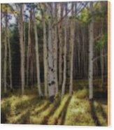 Aspen Sunbeams Wood Print
