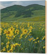 Aspen Sunflower And Mountain Landscape Wood Print