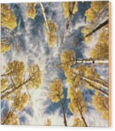Aspen Tops Towards The Sky Vintage  Wood Print