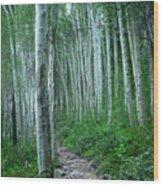 Aspen Trails  Wood Print
