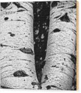 Aspen Tree Art Wood Print