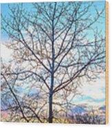 Aspen Tree At Sunset Wood Print