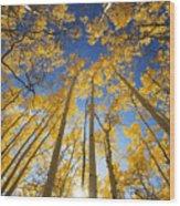 Aspen Tree Canopy 3 Wood Print