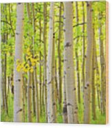 Aspen Tree Forest Autumn Time Portrait Wood Print