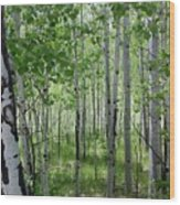 Aspen Trees Colorado Wood Print