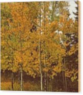 Aspen Trees With Autumn Leaves  Wood Print