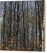 Aspen Trunks 2 Wood Print