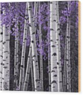 Aspen Trunks Lavender Leaves Wood Print