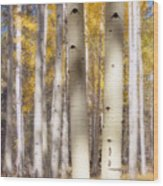 Aspen Trunks Wood Print