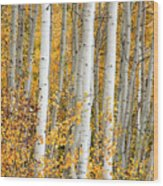 Aspen With Fall Color Wood Print