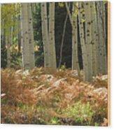 Aspens And Ferns Wood Print