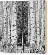 Aspens And The Pine Black And White Fine Art Print Wood Print