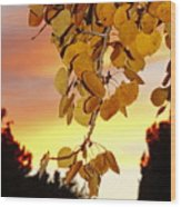Aspens At Sunset Wood Print