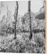 Aspens Black And White Wood Print