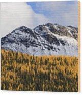Aspens In Fall Colors Wood Print
