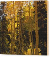 Aspens In Fall Wood Print
