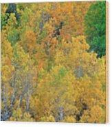 Aspens In Fall Eastern Sierras California Wood Print