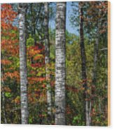Aspens In Fall Forest Wood Print