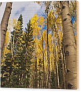 Aspens In Santa Fe 3 Wood Print
