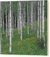 Aspens In Spring Wood Print